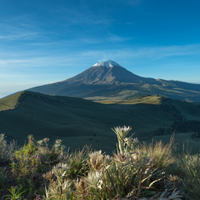 Mountain Roses and Popoctepetl by Cristobal Garciaferro Rubio - Landscapes Travel ( volcano, mexico, puebla, popocatepetl, volcanoes, flowers, flower )