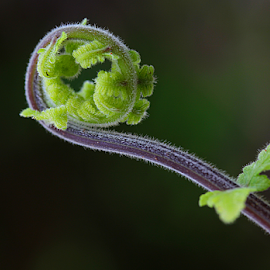 by Carmen Quesada - Nature Up Close Other plants ( fern, green, frond, stem, leaves )