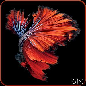 betta fish 6s live wallpaper on google play reviews | stats