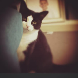 Socks the Cat by Emily Haskell - Instagram & Mobile iPhone
