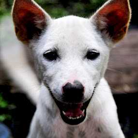siputih by Daenk Andi - Animals - Dogs Puppies ( warna, bintang.anak anjing, natural, main )