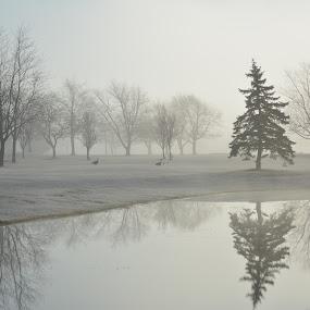 the mist by Thomas Fitzrandolph - Landscapes Waterscapes ( nature, niagara county ny, trees, nikon d5200, landscapes, morning, spring, lockport ny,  )