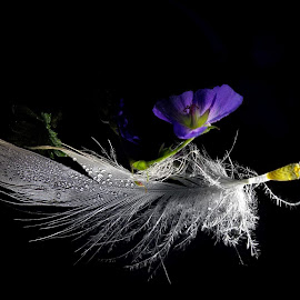 *** by Jurijs Ratanins - Instagram & Mobile Android ( plant, mobilography, nature, feather, flower )