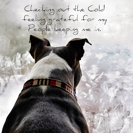 warmth  by Jodi Iverson - Typography Captioned Photos