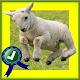 Adventurer Sheep Farm Running