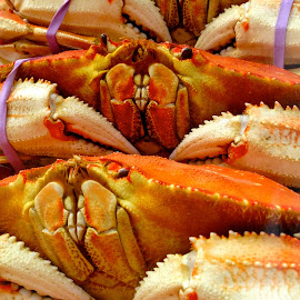 Dungeoness Crab by Dave Feldkamp - Food & Drink Cooking & Baking ( crab claws, dungeoness crabs, claws, crabs, crab )