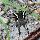 Green Dragontail