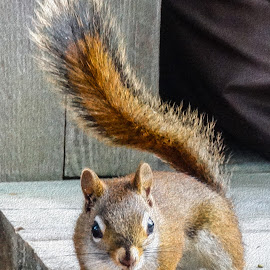 by Kathryn Potempski - Animals Other Mammals ( amimal, nature, nature and wildlife, nature close up, squirrel )