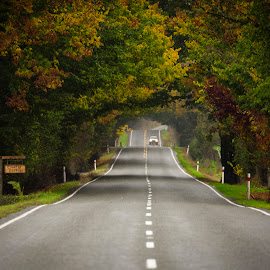 road ahead by Nick Mcilroy - City,  Street & Park  Street Scenes ( car, canon, photos, eos, tree, 5d mark lll, ef24-70mm f/2.8l ii usm, outdoors, bush, nicksplace, road, photo, photography )