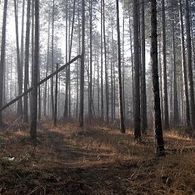 Гора by Georgi Kolev - Landscapes Forests ( мъла., гора., слънце., треви., време. )