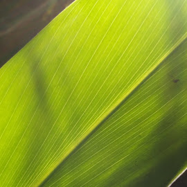 looking through nature by Sreejit Chaithanya - Nature Up Close Leaves & Grasses (  )