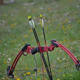 Archery by Sherri Updike-Dzeylion - Sports & Fitness Other Sports