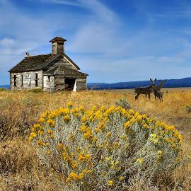 Schoolhouse and deer by Gaylord Mink - Digital Art Places ( deer, schoolhouse, rabbit brush, landscape, digital art )