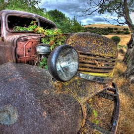 Vine Truck by Eric Demattos - Transportation Automobiles ( truck, vine, eric demattos, forgotten, abandoned )