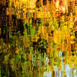 Water Garden by Ken Miracle - Abstract Patterns ( idaho, plant, water, reflection, boise, heron cove, location, still life, things, leaves )