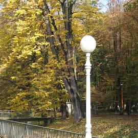 Autumn in the park by Marija Čaušić - City,  Street & Park  City Parks ( wood, trail, pavilion, shining, leaf )