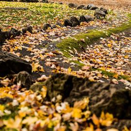 Fall colours by Pierre Tessier - City,  Street & Park  City Parks ( pixoto,  )