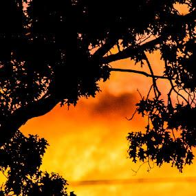 by Lena DeStefano - Nature Up Close Trees & Bushes