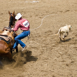 Gotcha! by Mike O'Connor - Sports & Fitness Rodeo/Bull Riding ( cowboy, calgary stampede, roping, rope, horse, calf, action, rodeo, western,  )