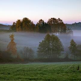 by Siniša Almaši - Landscapes Prairies, Meadows & Fields ( morning, landscape, depth, dslr, colours, field, nature, fog, autumn, meadow, trees, sunrise, view, light, mist )