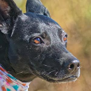 Dog 785_DxO Q.jpg