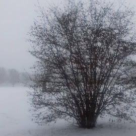 The Park by Gay Reilly - Novices Only Landscapes ( winter, tree, park, snow, misty )