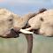 POTY 2012 Addo Elephants.jpg