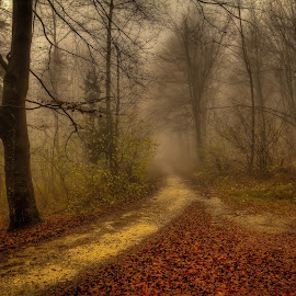 In the woods by Rado Krasnik - Landscapes Forests ( nature, autumn, trees, forest, mist )