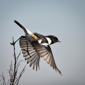 by Hannes van Rooyen - Animals Birds (  )