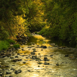 Yamhill river by Bob Applegate - Landscapes Forests ( water, stream, sunset, trees, forest )