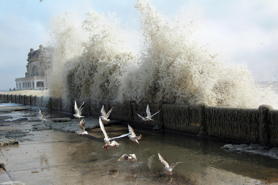 Big Wave by Alex Alex - Landscapes Weather ( water, seagull, wave, romania, casino, big )