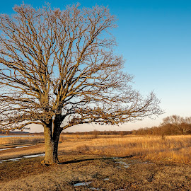 Lone Lake Tree by Dale Fillmore - Landscapes Prairies, Meadows & Fields ( park, tree, lakeside, fields, end of winter,  )