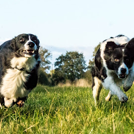 Wooohoooo. by Sue Lascelles - Animals - Dogs Running