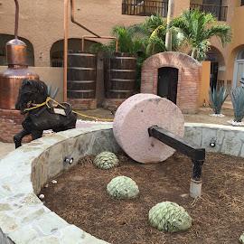 Old Wine press by Sharon Leckbee - City,  Street & Park  Markets & Shops
