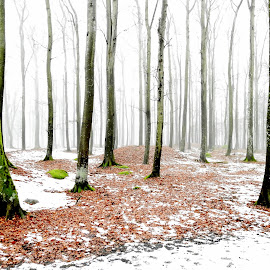 Frozen Foggy Forest by Hiking Viking - Nature Up Close Trees & Bushes ( forests, colorful, colors, frost, forest, colorfull, leaf, landscape, leaves, close up, tree trunk, colour, epic, colourful, nature, tree, snow, forest floor, nature up close, trees, scenery )