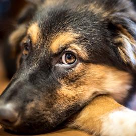 Dog by Darren Sutherland - Animals - Dogs Portraits