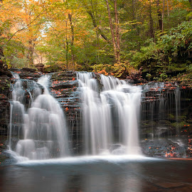 Portrait of Fall at Wyandot Falls by Gene Walls - Landscapes Forests ( kitchen creek, waterfall, pennsylvania, forest, leaves, usa, ricketts glen, wilderness, stream. creek, autumn, foliage, fall, state park, falls, wyandot falls, trees, wyandot )