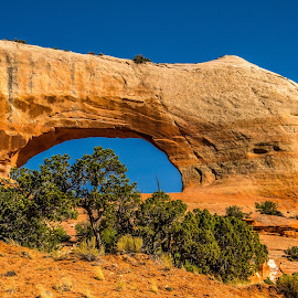 Wilson Arch by Rita Taylor - Landscapes Deserts ( curve, desert, location, afternoon, greenery )