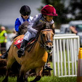 pony racing by Paul Scullion - Sports & Fitness Other Sports ( pony, riding, horse, exmoor, exmoor pony, running, race )