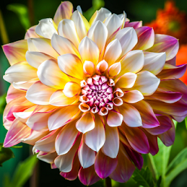 Fllower by Darren Sutherland - Flowers Single Flower
