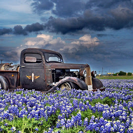 1936 Chevy in a field of Blue Bonnets by Kevin Dietze - Transportation Automobiles