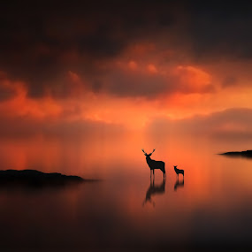 The Deer at Sunset by Jennifer Woodward - Digital Art Places