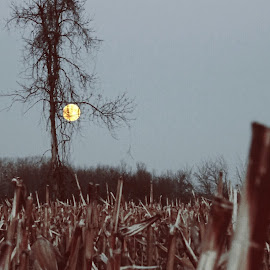 Moon by Dorothy Day - Landscapes Prairies, Meadows & Fields ( moon, tree, nature, cornfield, dusk )