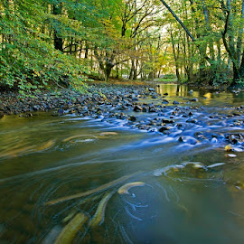 by Siniša Almaši - Nature Up Close Water ( water, waterscape, forest, landscape, leaves, depth, colours, nature, autumn, trees, view, stones, river )