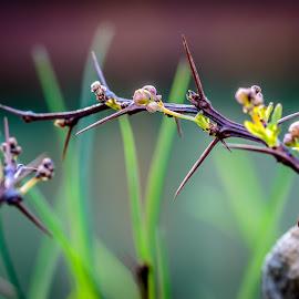 Spring has just arrived by Valics Lehel - Nature Up Close Gardens & Produce ( macro, flowering, flowers, spring, flower )
