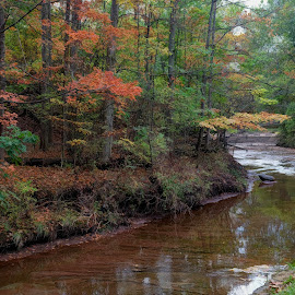 Creekside by Millieanne T - Landscapes Waterscapes