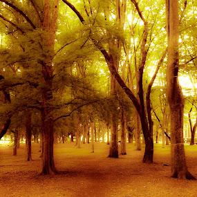the park by Yuliani Liputo - City,  Street & Park  City Parks ( park, tokyo, trees )