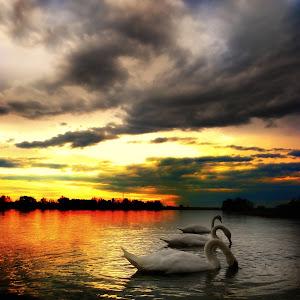 sunset labudi.jpg