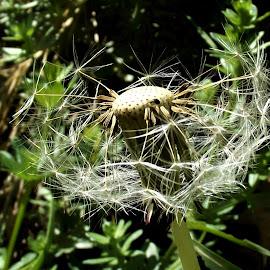 by László Nagy - Nature Up Close Other plants