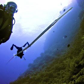 big bro 2nd dive (50).jpg